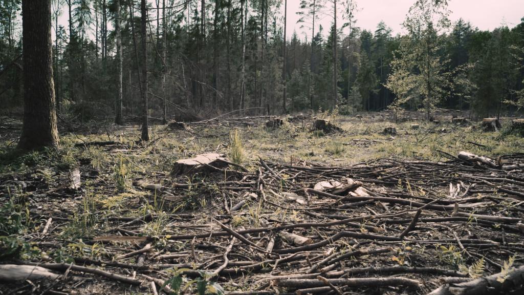 """Puszcza Białowieska, kadr z filmu """"Do ostatniego drzewa"""" - reż. obrazu Aia Asé, 2017"""
