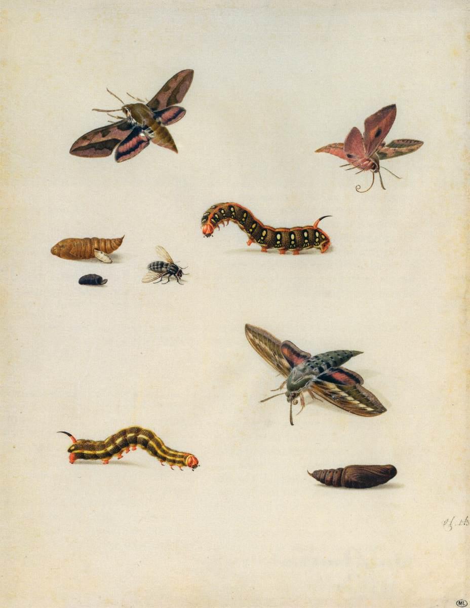 Insekty, Herman Henstenburgh, pierwsza połowa XVIII w., Muzeum Luwr, via Wikimedia Commons